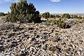 Near Arroyo Seco - Flickr - aspidoscelis (2).jpg