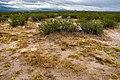 Near Foote Draw - Flickr - aspidoscelis (4).jpg