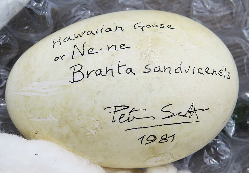Nene Egg signed by Sir Peter Scott