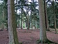 New Forest, Hampshire - panoramio (9).jpg