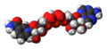 Nicotinamide adenine dinucleotide zwitterion spacefill.png