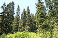 North Fork Skykomish Trail 0211.jpg