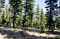 OCHOCO-Sustainability & Resiliency Camp-004 (26434219675).jpg