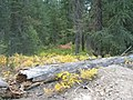 Old Log and Fall Colors (3617132734).jpg