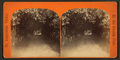 Orange archway on Mr. Ball's place, known as Lover's Lane, from Robert N. Dennis collection of stereoscopic views 2.png