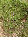 Orchidaceae.3947.JPG