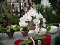 Orchideen - panoramio - Arnold Schott (1).jpg