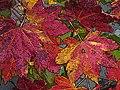 Oregon Leaves (14000256758).jpg