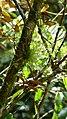 Orquideas. - panoramio.jpg
