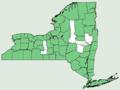 Osmunda claytoniana NY-dist-map.png
