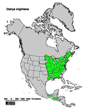 Ostrya virginiana - Image: Ostrya virginiana range map
