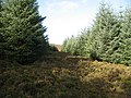 Overgrown track, Griffin Forest - geograph.org.uk - 1513333.jpg