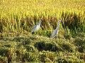 Pássaros em Eldorado do Sul.JPG