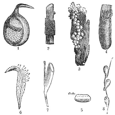 PSM V39 D237 Eggs of insects.jpg