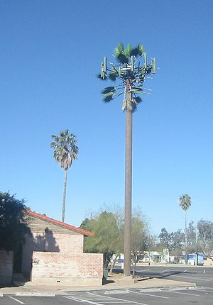 Cell tower disguised as a palm tree in Tucson,...