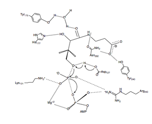 Pantothenate kinase - Fig. 3 Proposed catalytic mechanism for PanK-II