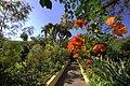 Paradise garden (358717449).jpg