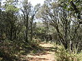 Parc Natural de la Tinença de Benifassà 3.JPG