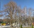 Park at early spring. February 2014. - Парк ранней весной. Февраль 2014. - panoramio.jpg