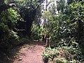 Parque Ecológico de El Boliche - Quito, Equador - panoramio (5).jpg