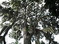 Parque Gallineral Ceiba.jpg