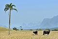 Parque Nacional de São Joaquim - Grão Pará 03.jpg