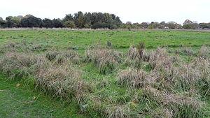 Parsloes Park - Parsloes Park Squatts