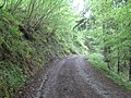 Path below the railway embankment in Draw Wood - geograph.org.uk - 803975.jpg