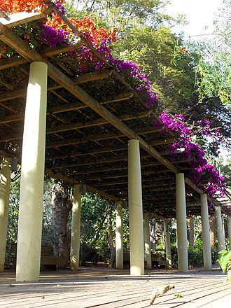 Pergola - Pergola covered in bougainvillea