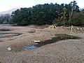 Petite Île de Godinne, chômage de la Meuse.jpg