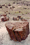 The eponymous petrified wood at Petrified Forest National Park
