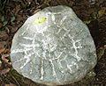 Petroglifos en Guayabo.JPG