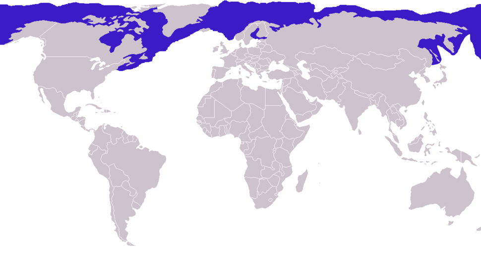 Phoca hispida distribution