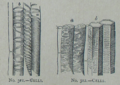 Picture Natural History - No 311 312 - Cells.png