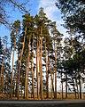 Pie Karātavu kalna - panoramio.jpg