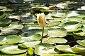 PikiWiki Israel 30823 Plants of Israel.JPG