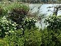 Pilikula Botanical Garden in Mangalore - 23.jpg