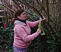 Pink human cutting off branches in Auderghem, Belgium (DSCF2376).jpg