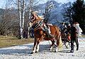 Pinzgauer Brauchtums- und Trachtenschlittenfest, 2. Februar 2014, 5.jpg