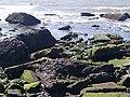 Point emery tidelands with birds.jpg
