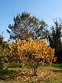 Poltava Botanical garden (64).jpg