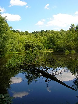 Pond, Woolbeding Common - geograph.org.uk - 864871
