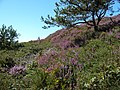 Pookeen, Co. Cork, Ireland - panoramio - georama (7).jpg