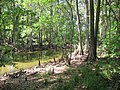 Prairie Creek - panoramio.jpg
