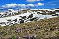 Pranvera në Malet e Sharrit, Dragash.jpg