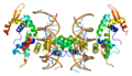 Protein FOXP2 PDB 2a07 2.png