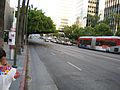 Pruned tree Wilshire Boulevard Los Angeles 2008-06.jpg