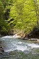 Psheha river.jpg