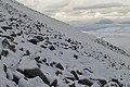 Ptarmigan in Winter Coats (geograph 5280155).jpg