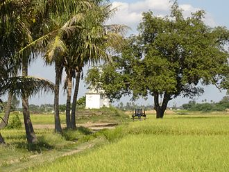 Battle of Pollilur (1781) - Location of Pullalur obelisks situated amidst paddy fields and coconut grove